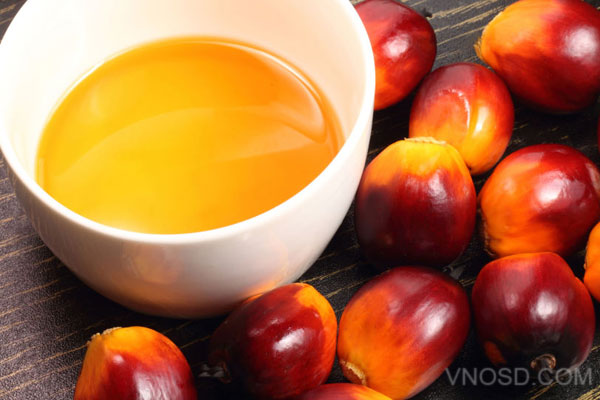 Dầu Cọ – Palm Oil